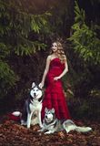 A beautiful blonde girl in a chic red dress, walking with two husky dogs in an autumn forest. Stock Photo