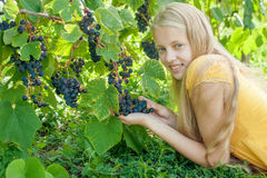 Beautiful blonde girl in fall vineyard Stock Images