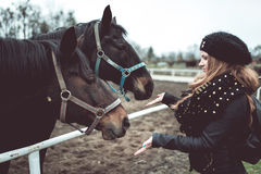 Beautiful blonde girl feeds from a hand a big brown horse Royalty Free Stock Photo