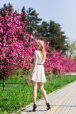 Beautiful blonde girl with long wavy curls in a white dress walk in the park among the pink trees, stunning makeup. Beautiful blonde girl with long wavy curls in royalty free stock photo
