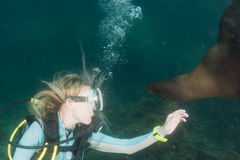 Beautiful blonde girl playing with sea lion underwater Royalty Free Stock Image
