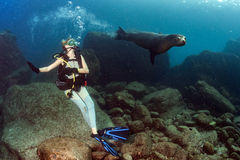 Beautiful blonde girl playing with sea lion underwater. Sea lion seal coming to blonde diver girl underwater Stock Images