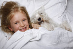 Beautiful blonde little girl laughing and lying with white schnauzer puppy dog on white bed. Friendship concept. Royalty Free Stock Image