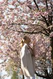 Beautiful blonde young woman in Sakura Cherry Blossom park in Spring enjoying nature and free time during her traveling royalty free stock images