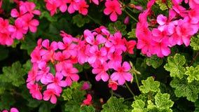 Beautiful, Bloom, Blooming stock photos