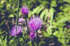 Beautiful, Bloom, Blooming Royalty Free Stock Images