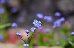 Beautiful, Bloom, Blooming royalty free stock photography