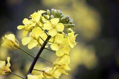 Beautiful, Bloom, Blooming Royalty Free Stock Image