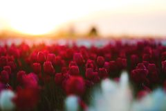 Beautiful, Bloom, Blooming Stock Images