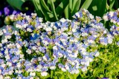 Geranium wilfordii with purple color. Beautiful bloom flower name Geranium wilfordii with purple pastel colour stock image