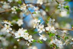 Beautiful bloom season Royalty Free Stock Images