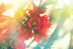Beautiful blooming branch Stock Images