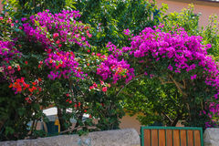 Beautiful blooming bushes near the small house stock photos