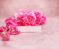 Beautiful blooming carnation flowers on a stone background with text space , vintage and retro color tone Stock Photography