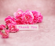 Beautiful blooming carnation flowers with Thank you wording on white card paper Royalty Free Stock Images