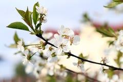 Beautiful blooming flower Stock Photos