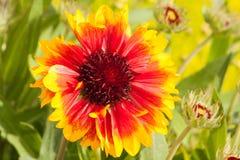 Beautiful blooming Flowers. In summer season Stock Images