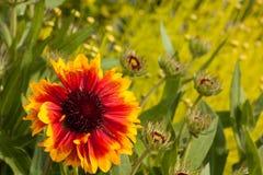 Beautiful blooming Flowers. Beautiful blooming flowers in summer season Royalty Free Stock Photography