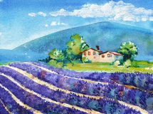 Beautiful blooming lavender fields with house in distance Stock Photography