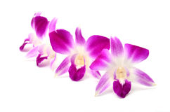 Beautiful blooming orchid isolated Royalty Free Stock Photos