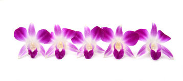 Beautiful blooming orchid isolated Stock Photo