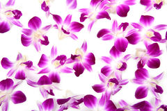 Beautiful blooming orchid isolated Royalty Free Stock Photography