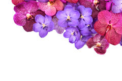 Beautiful blooming orchid Stock Photo