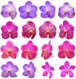 Beautiful blooming orchid isolated Stock Photos