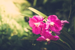 Beautiful blooming orchids in forest Royalty Free Stock Images