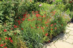 Blooming plants in Great Dixter House & Gardens. stock image