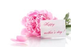 Beautiful blooming peonies Royalty Free Stock Image
