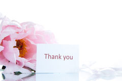 Beautiful blooming peony Royalty Free Stock Images