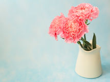 Beautiful blooming of pink carnation flowers Royalty Free Stock Images