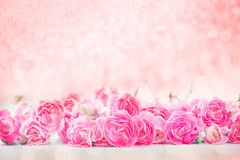 The beautiful blooming pink carnation flowers with sweet bokeh Stock Photography