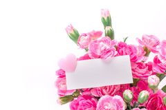 Beautiful blooming of  pink carnation flowers on a white backgro Stock Images