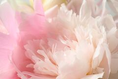 Free Beautiful Blooming Pink Peony As Background Stock Photos - 191816053
