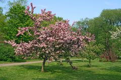 Beautiful blooming pink tree stock images