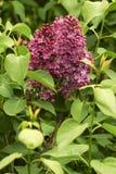 Beautiful blooming Stock Photos