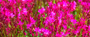 Beautiful blooming red blur flowers background, Stock Images
