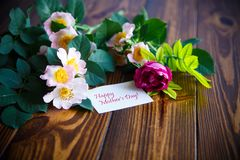 Beautiful blooming roses and a greeting card for the mother Royalty Free Stock Image