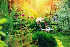 beautiful blooming summer private garden with wooden chair royalty free stock photography