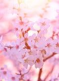 Beautiful blooming tree Stock Photos