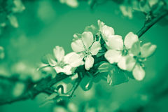 Beautiful blooming tree Royalty Free Stock Image