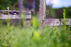 Beautiful blooming wild summer flowers at rural animal farm as a Stock Photos