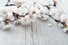 Beautiful blossom branch Stock Photo