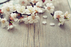 Beautiful blossom branch Stock Photos