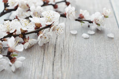 Beautiful blossom branch Royalty Free Stock Images