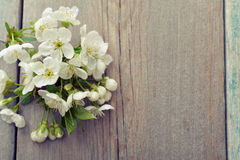 Beautiful blossom branch Stock Photography