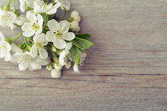 Beautiful blossom branch Royalty Free Stock Photos