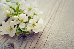 Beautiful blossom branch Royalty Free Stock Photography